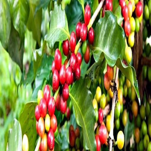 Tea and Coffee International Symposium 2019, Processing Marketing and Sustainability